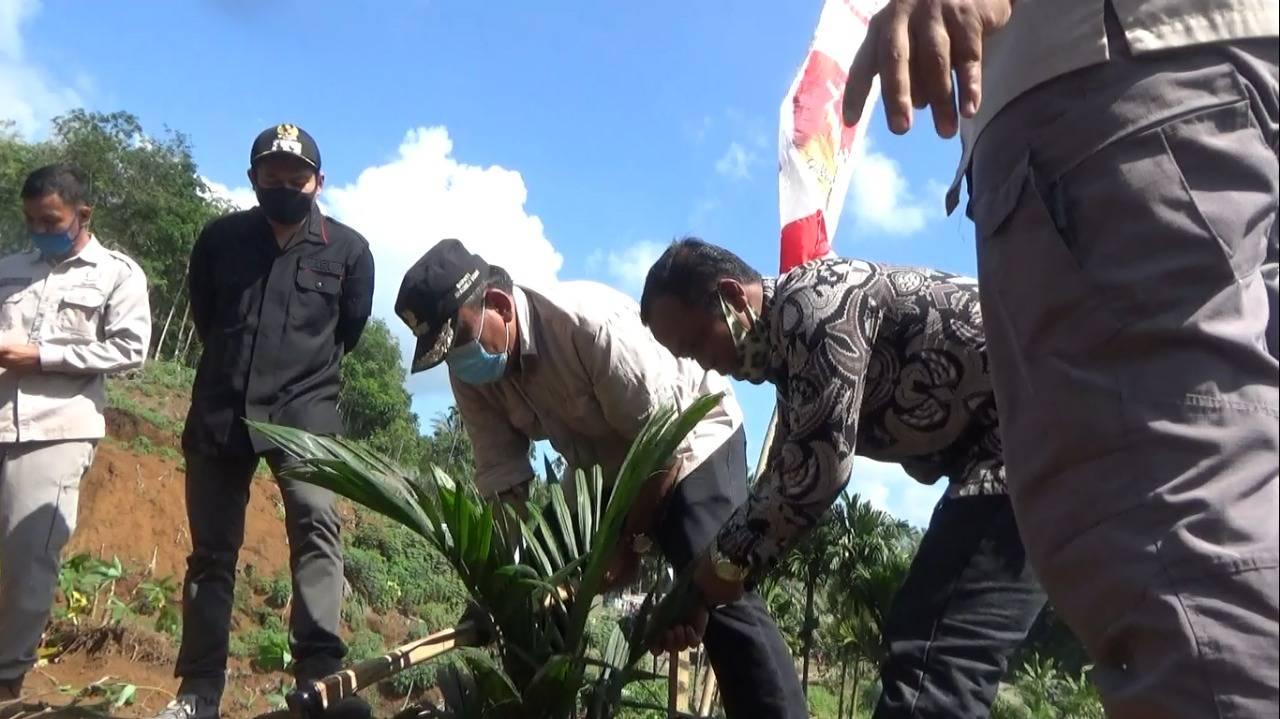 Bupati dan Wabup BU Tanam Perdana Replanting Sawit Desa Tanjung Putus