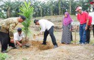 Bupati Bengkulu Utara Tinjau Lokasi Perkebunan Replanting