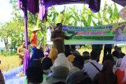 Panen Raya Padi Sawah Kemumu, Bupati Bengkulu Utara Harap Ada Peningkatan Pada Intensifikasi Maupun Ekstensifikasi