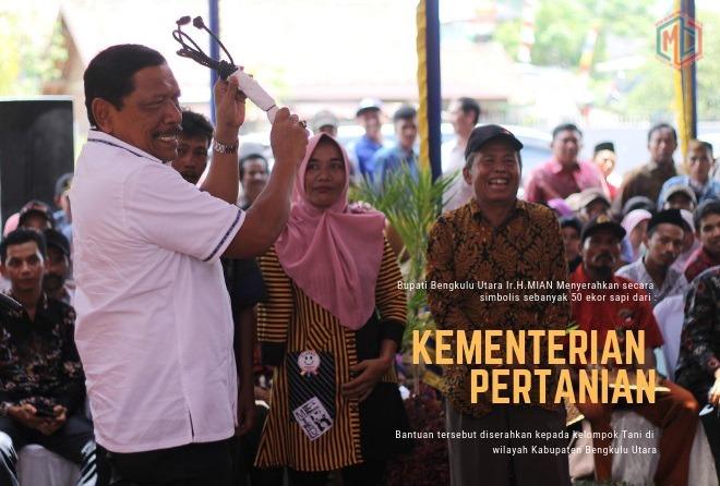 Bantuan 50 Ekor Sapi Kementan Disalurkan di Empat Kecamatan di Kabupaten Bengkulu Utara