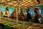 Jaga Ketahanan Pangan Saat Pandemi Covid-19, Bupati Mian Bagikan Ribuan Bibit Sayur